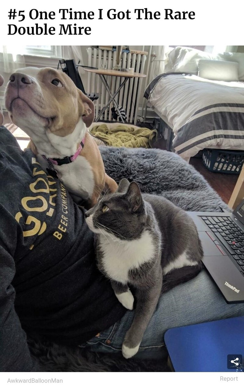 Dog - #5 One Time I Got The Rare Double Mire ThinkPad Report AwkwardBalloonMan