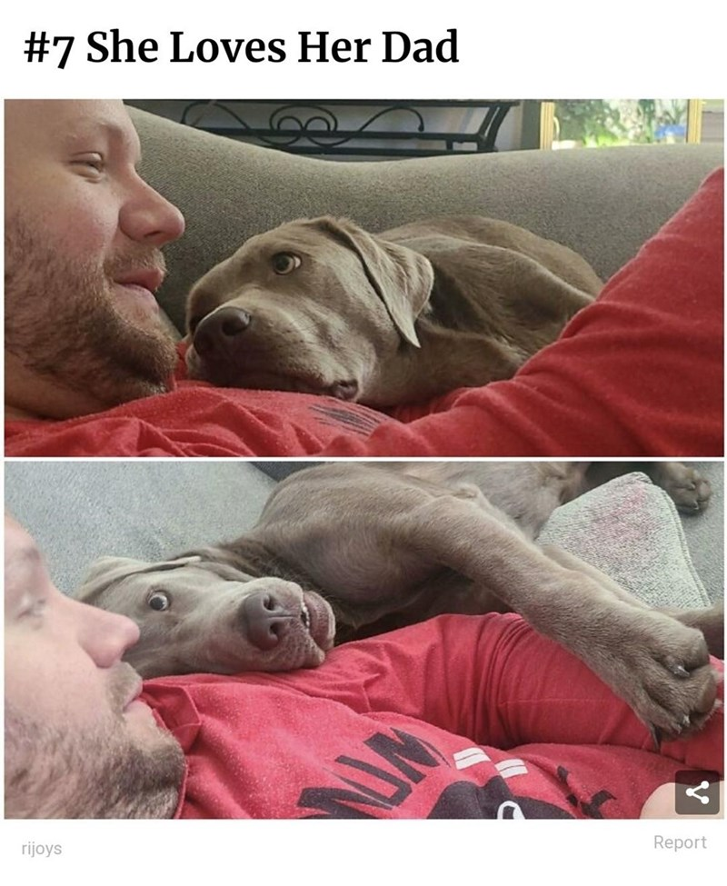 Dog - #7 She Loves Her Dad rijoys Report