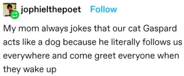 Human body - jophielthepoet Follow My mom always jokes that our cat Gaspard acts like a dog because he literally follows us everywhere and come greet everyone when they wake up