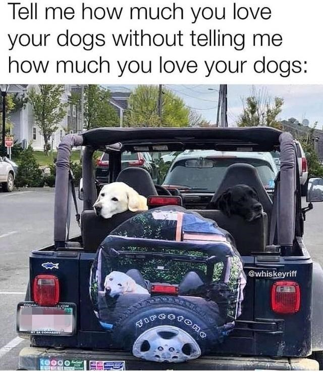 Car - Tell me how much you love your dogs without telling me how much you love your dogs: @whiskeyriff పూ ం CO000