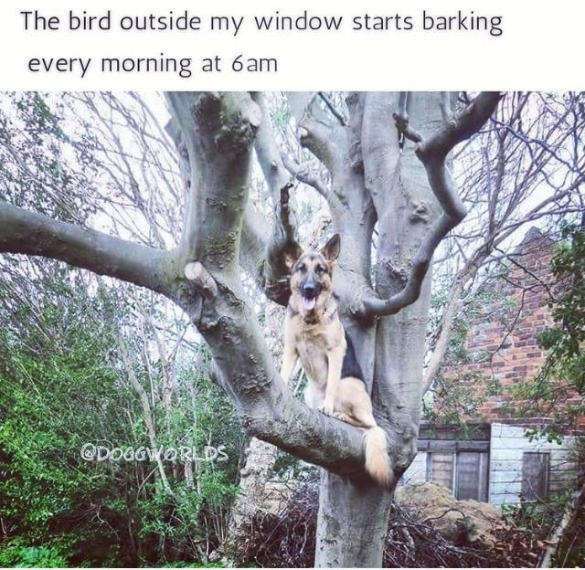 Plant - The bird outside my window starts barking every morning at 6am ODOGGWORLDS