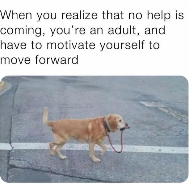 Dog - When you realize that no help is coming, you're an adult, and have to motivate yourself to move forward
