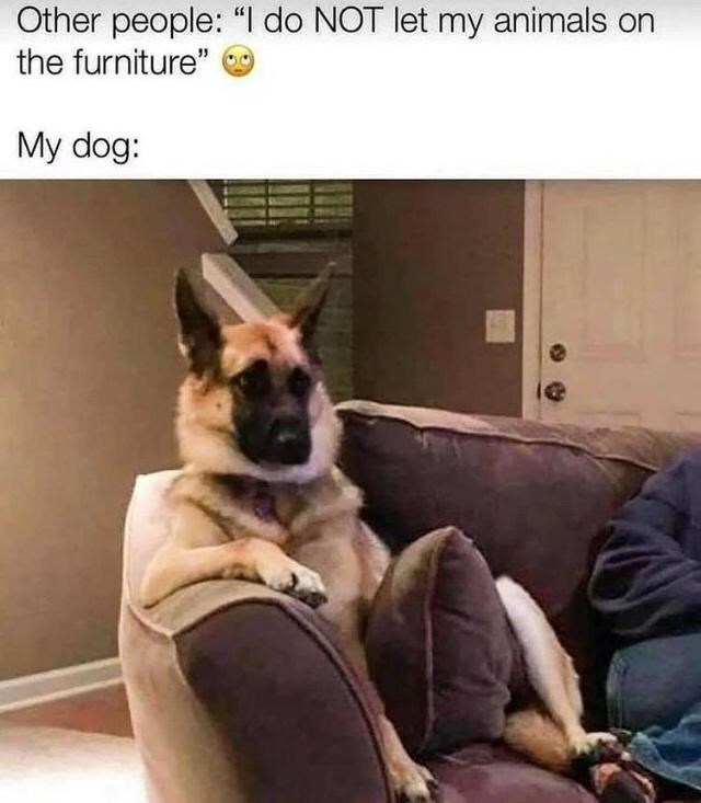 """Dog - Other people: """"I do NOT let my animals on the furniture"""" My dog:"""