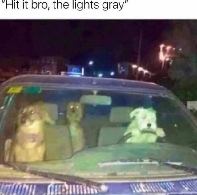 "Car - ""Hit it bro, the lights gray"""