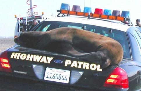 Car - HIGHWAY PATROL CA ETEUDT 1160844