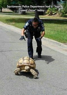 """Plant - Sacramento Police Department had a """"high speed chase"""" today.."""