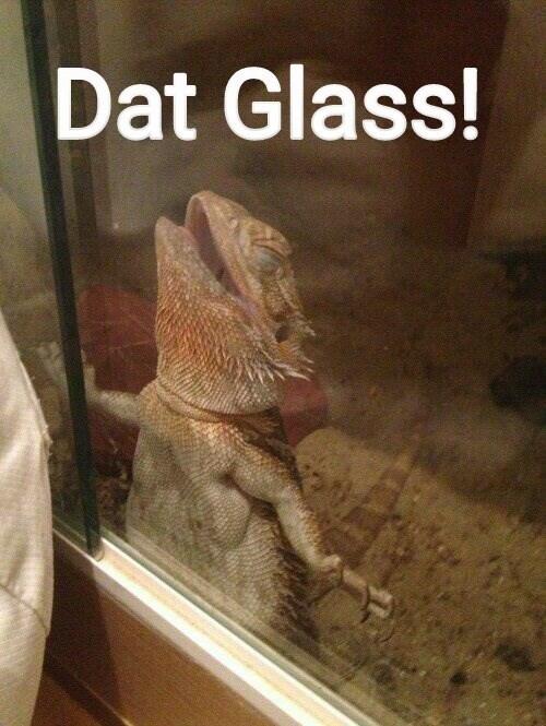Vertebrate - Dat Glass!