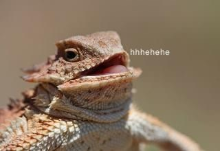 Reptile - hhhehehe