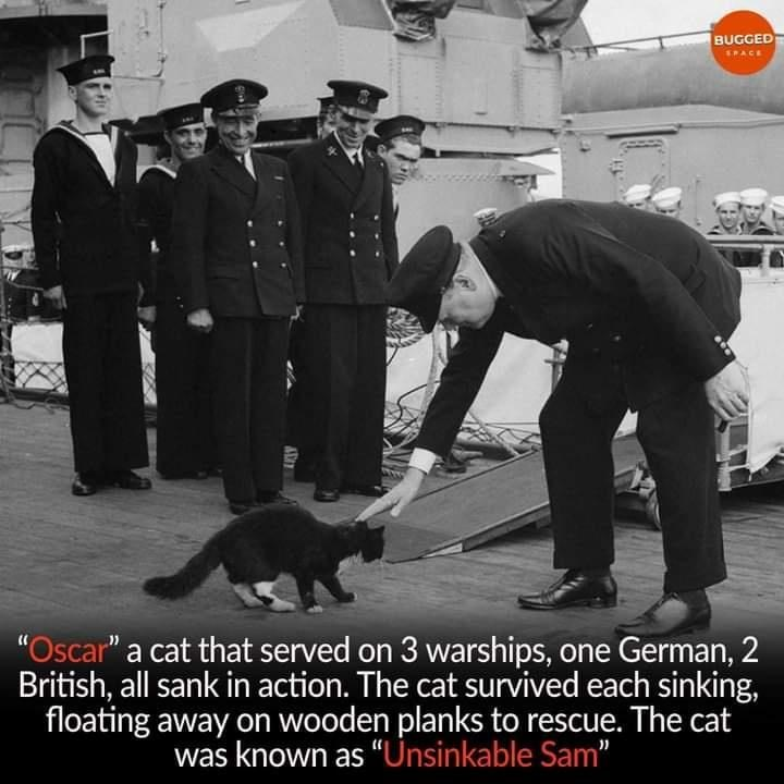 """Footwear - BUGGED SPACE """"Oscar"""" a cat that served on 3 warships, one German, 2 British, all sank in action. The cat survived each sinking, floating away on wooden planks to rescue. The cat was known as """"Unsinkable Sam"""""""