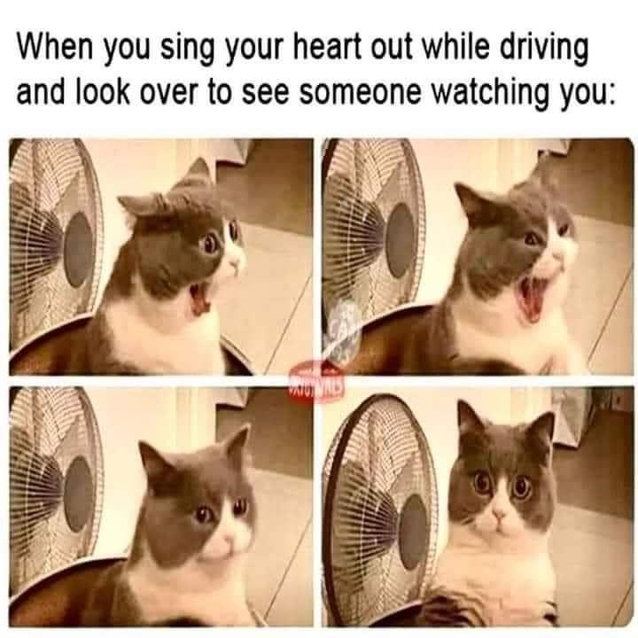 Cat - When you sing your heart out while driving and look over to see someone watching you: