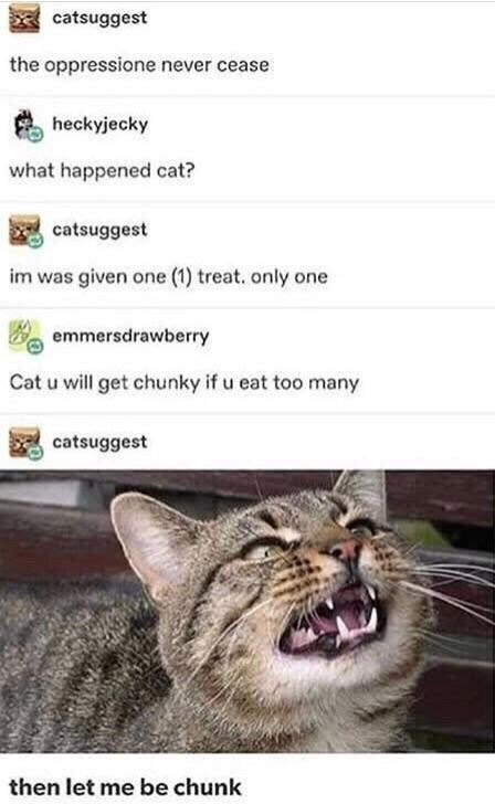 Cat - catsuggest the oppressione never cease heckyjecky what happened cat? catsuggest im was given one (1) treat. only one e emmersdrawberry Cat u will get chunky if u eat too many catsuggest then let me be chunk