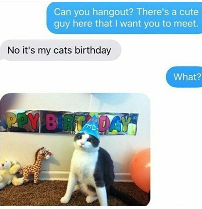 Cat - Can you hangout? There's a cute guy here that I want you to meet. No it's my cats birthday What? PPY BIRTADAY