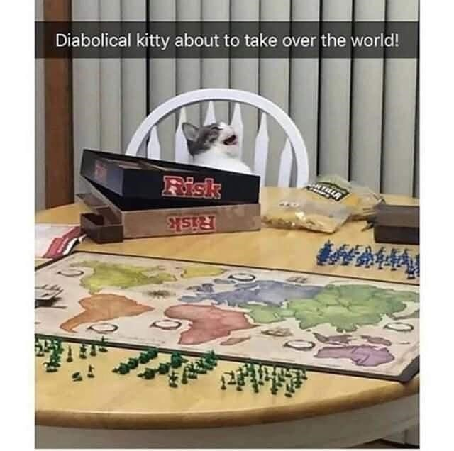 Tableware - Diabolical kitty about to take over the world! Fisk Risk