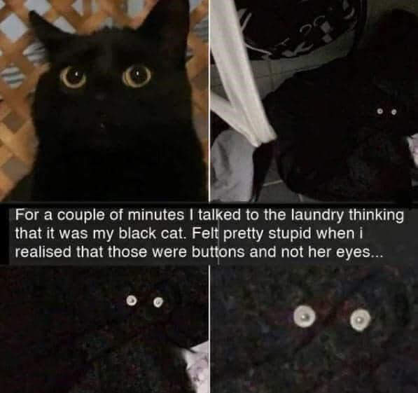 Cat - For a couple of minutes I talked to the laundry thinking that it was my black cat. Felt pretty stupid when i realised that those were buttons and not her eyes...