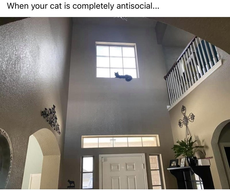 Building - When your cat is completely antisocial...