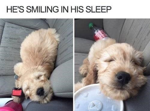 Dog - HE'S SMILING IN HIS SLEEP