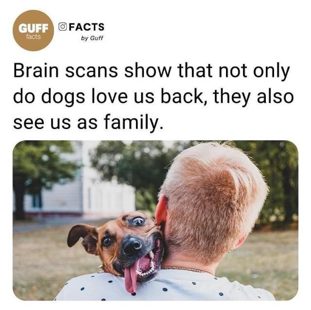 Dog - GUFF OFACTS facts by Guff Brain scans show that not only do dogs love us back, they also see us as family.