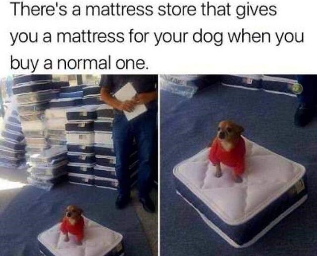 Vertebrate - There's a mattress store that gives you a mattress for your dog when you buy a normal one.