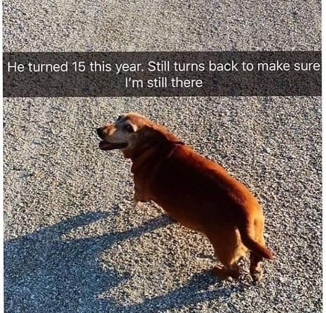 Dog - He turned 15 this year. Still turns back to make sure I'm still there