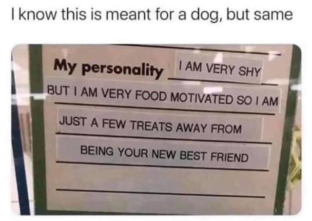 Rectangle - I know this is meant for a dog, but same I AM VERY SHY My personality BUT I AM VERY FOOD MOTIVATED SO I AM JUST A FEW TREATS AWAY FROM BEING YOUR NEW BEST FRIEND
