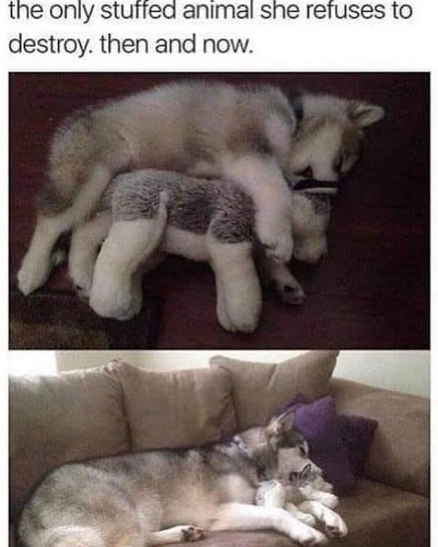 Photograph - the only stuffed animal she refuses to destroy. then and now.