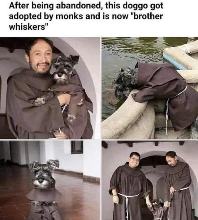 """Outerwear - After being abandoned, this doggo got adopted by monks and is now """"brother whiskers"""""""