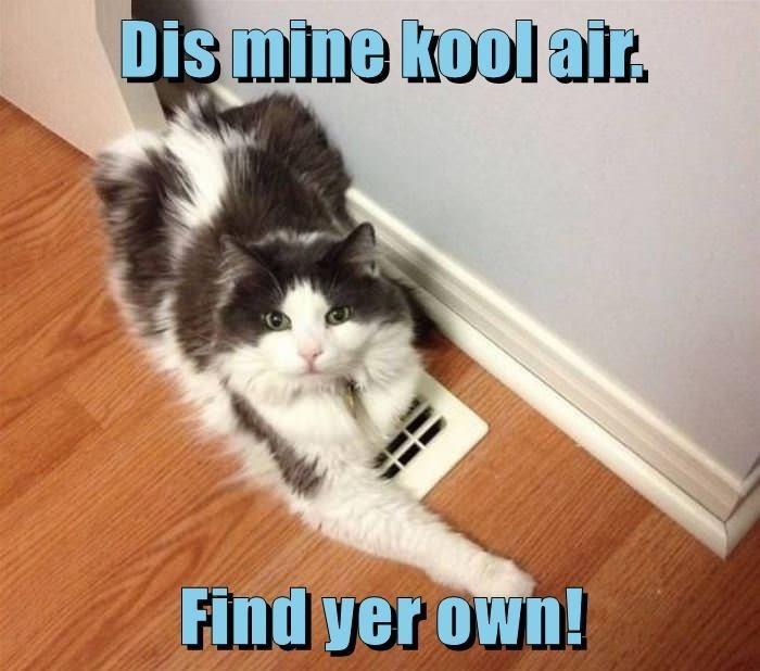 Cat - Dis mine kool air. Find yer own!