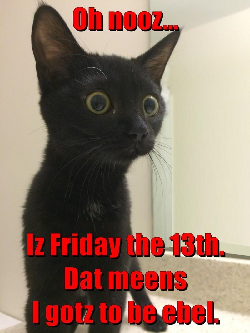 Cat - Oh nooz. Iz Friday the 13th. Dat meens I gotz to be ebel.