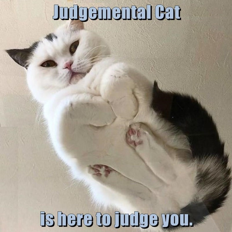Cat - Judgemental Cat is here to judge you.