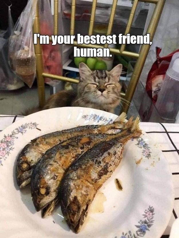 Food - I'm your bestest friend, human.