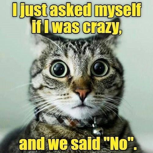 "Cat - Ojustasked myself IfIwas crazy, and we said ""No""."