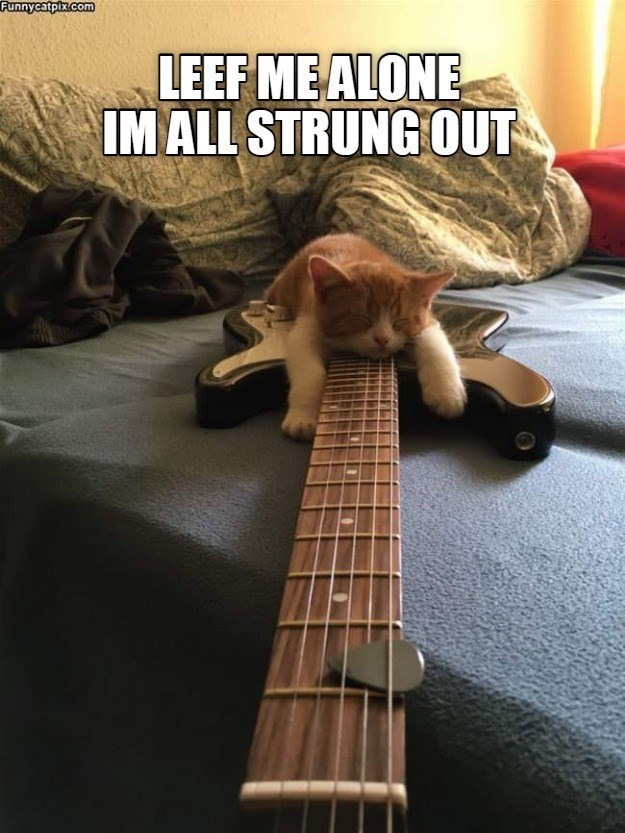 Musical instrument - Funnycatpix.com LEEF ME ALONE IM ALL STRUNG OUT