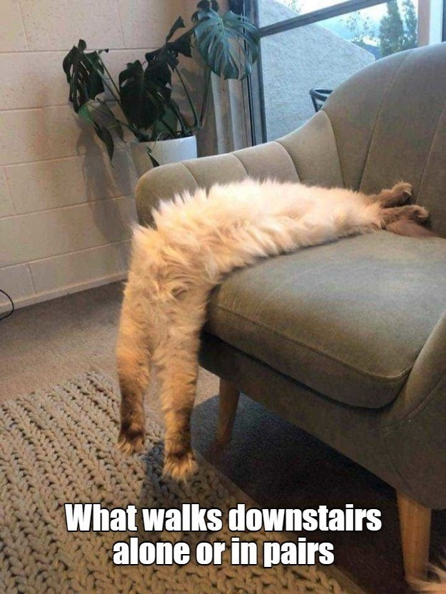Comfort - What walks downstairs alone or in pairs