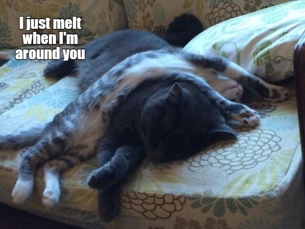 Felidae - Ijust melt when I'm around you