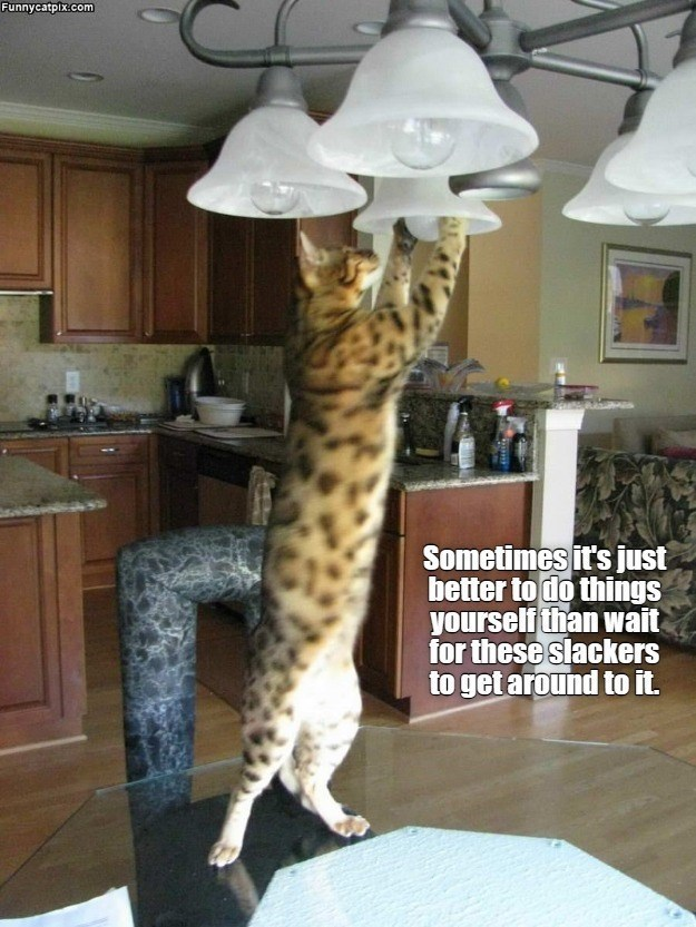 Furniture - Funnycatpix.com Sometimes it's just better to do things yourself than wait for these slackers to get around to it.