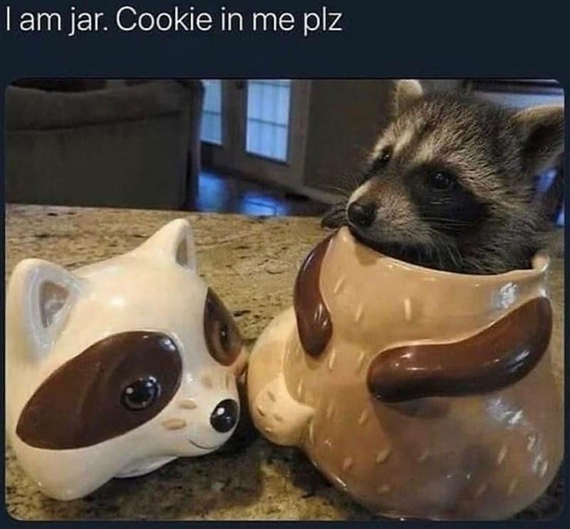 Carnivore - I am jar. Cookie in me plz