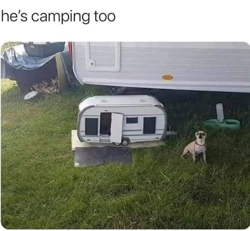 Dog - he's camping to0
