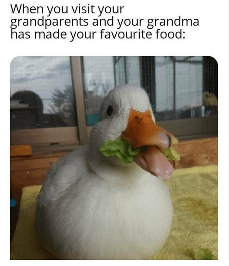 Beak - When you visit your grandparents and your grandma has made your favourite food: