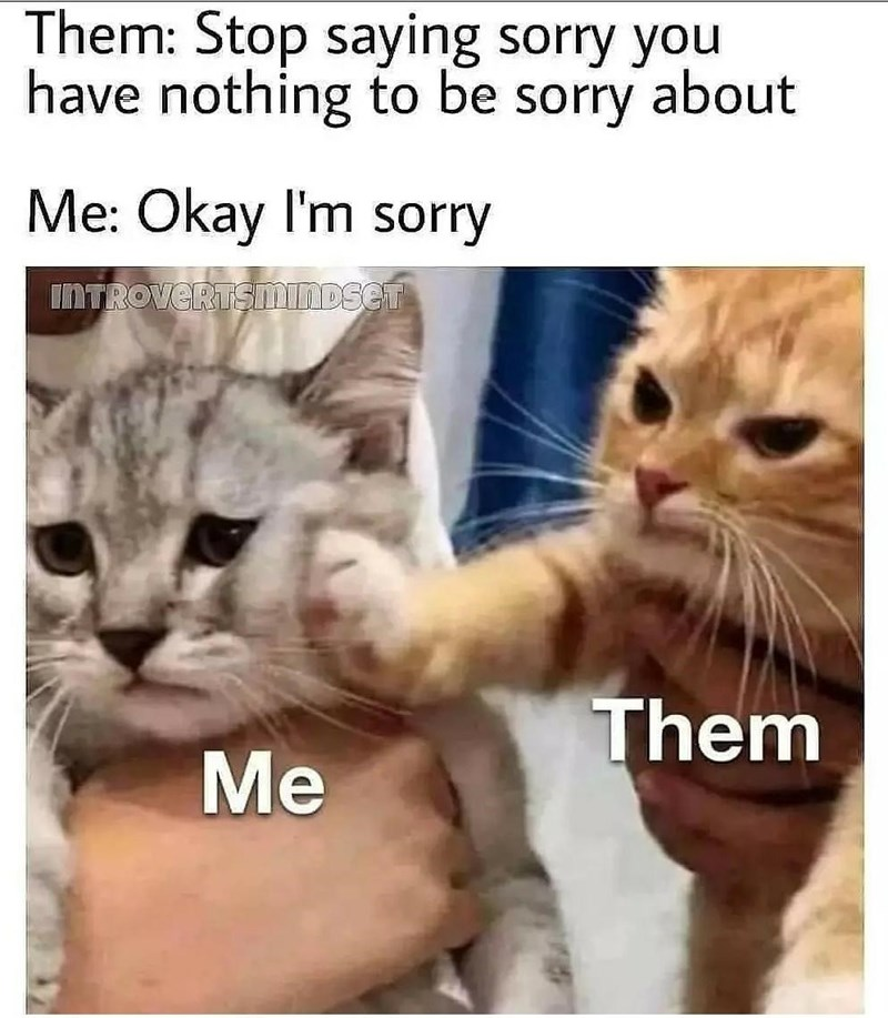 Cat - Them: Stop saying sorry you have nothing to be sorry about Me: Okay l'm sorry INTROVERTSMINDSET Them Me
