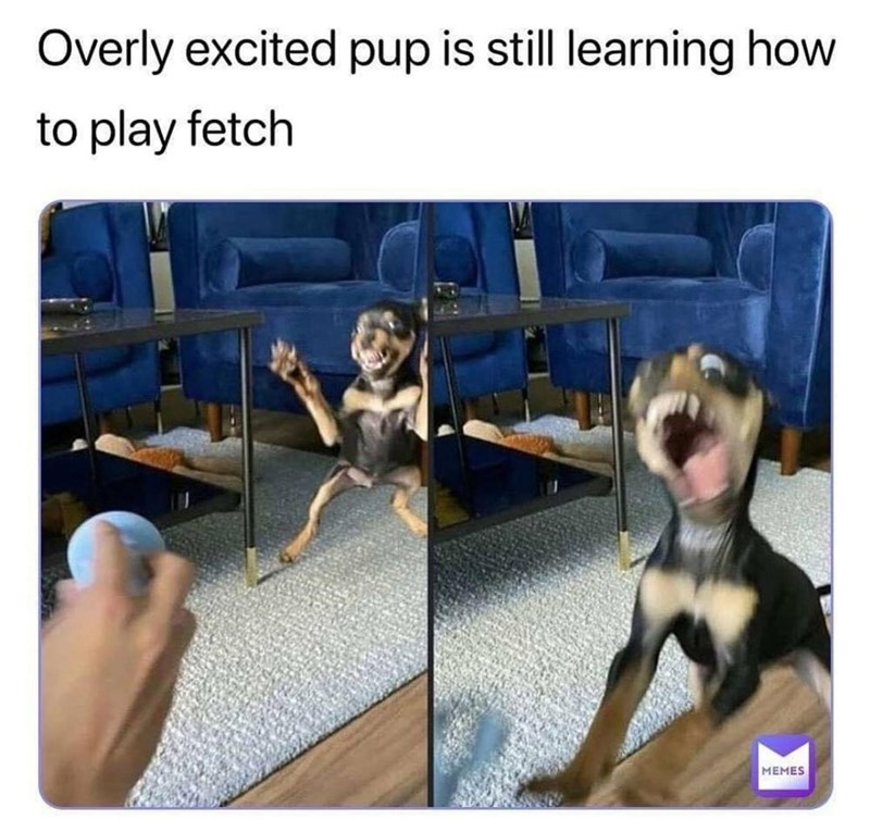Facial expression - Overly excited pup is still learning how to play fetch MEMES