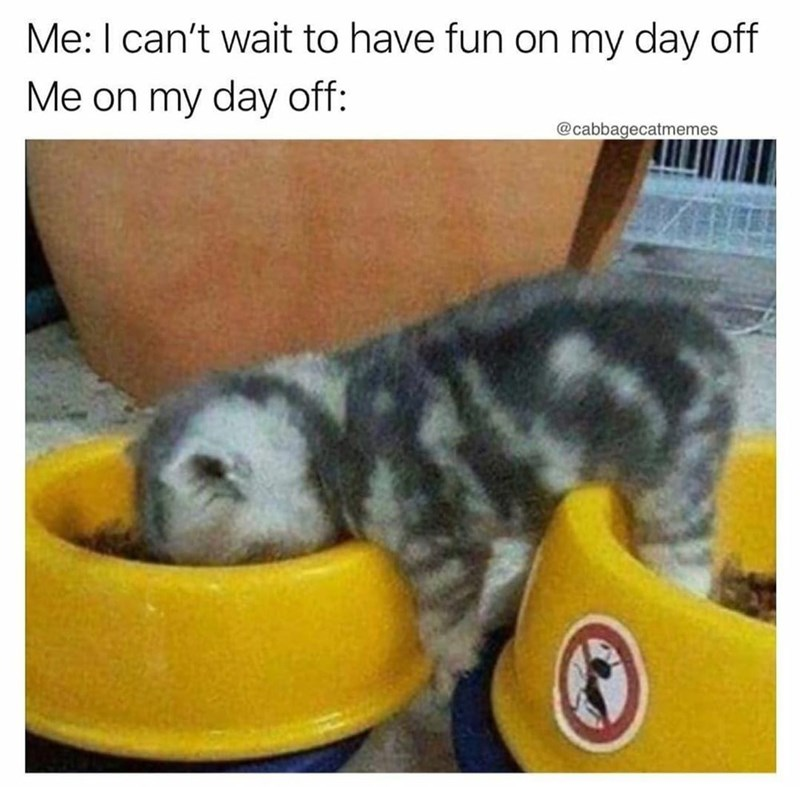 Vertebrate - Me: I can't wait to have fun on my day off Me on my day off: @cabbagecatmemes