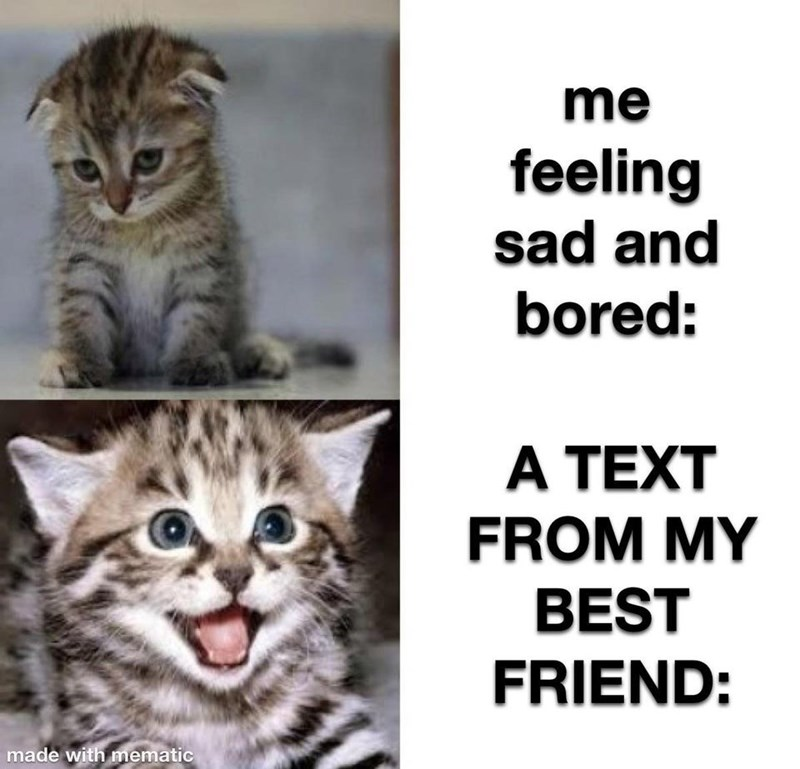Cat - me feeling sad and bored: A TEXT FROM MY BEST FRIEND: made with mematic