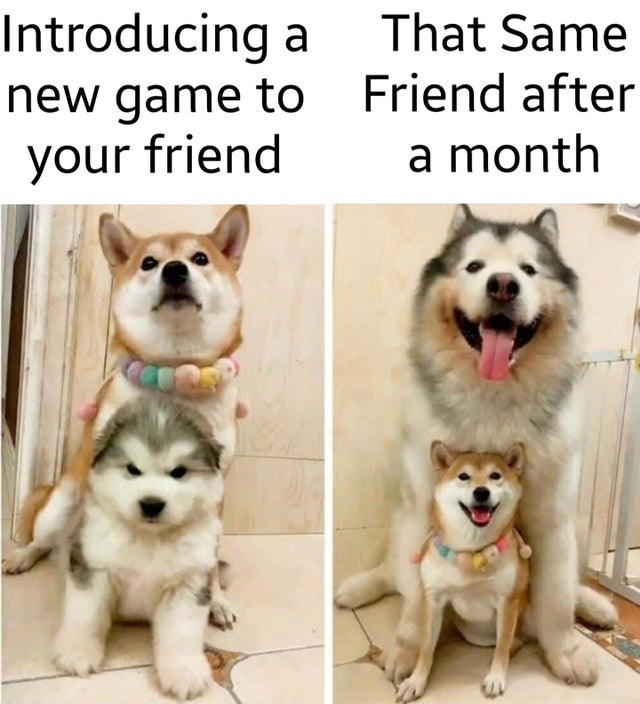 Dog - Introducing new game to Friend after your friend a That Same a month