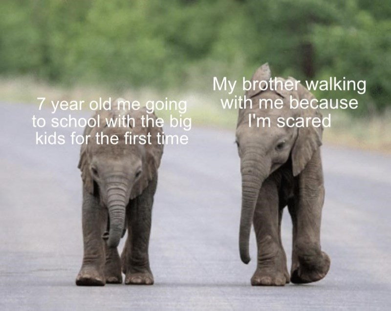 Elephant - 7 year old me going to school with the big kids for the first time My brother walking with me because I'm scared