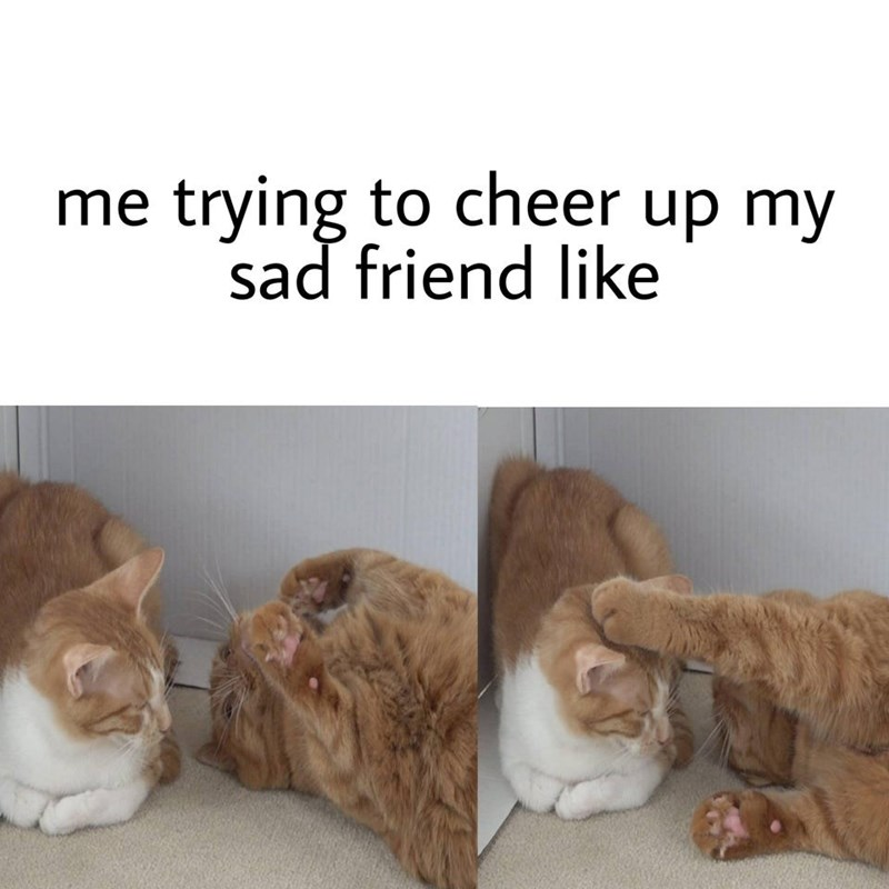 Cat - me trying to cheer up my sad friend like