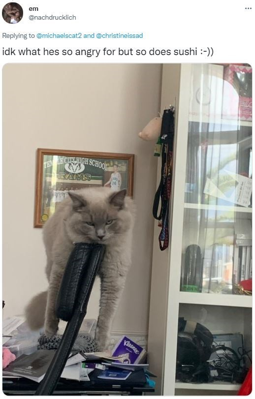 Cat - em ... @nachdrucklich Replying to @michaelscat2 and @christineissad idk what hes so angry for but so does sushi :-)) CANIGH SCHOO TEN RAMS-