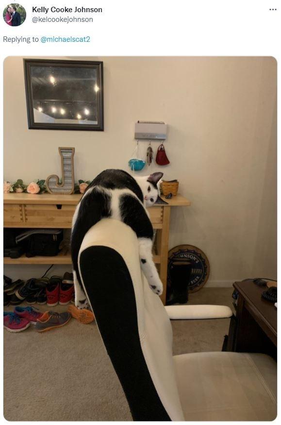 Penguin - ... Kelly Cooke Johnson @kelcookejohnson Replying to @michaelscat2 UNSON um
