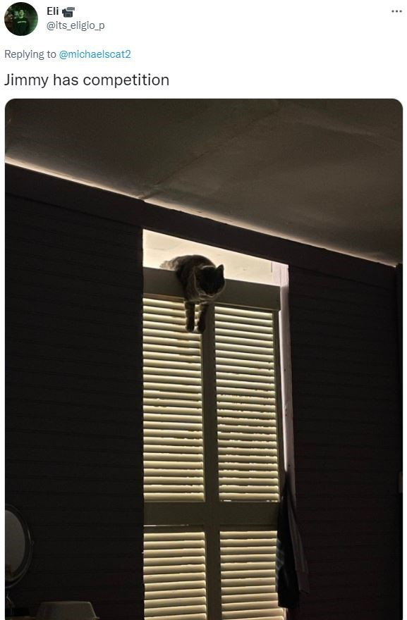Window - Eli S @its eligio_p Replying to @michaelscat2 Jimmy has competition