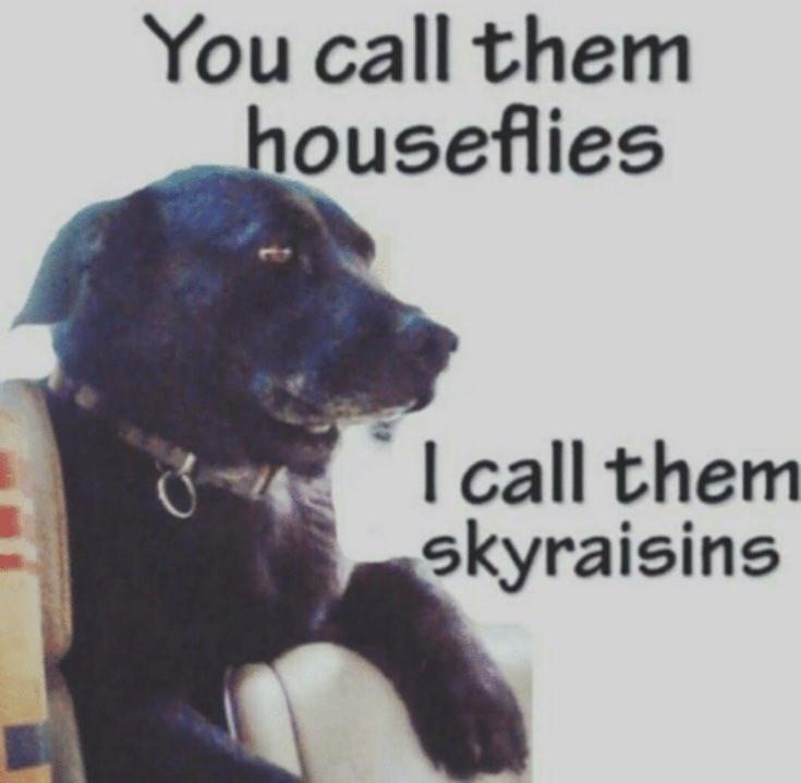 Dog - You call them houseflies I call them skyraisins