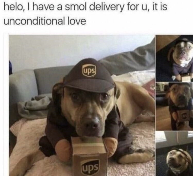 Dog - helo, I have a smol delivery for u, it is unconditional love ups ups